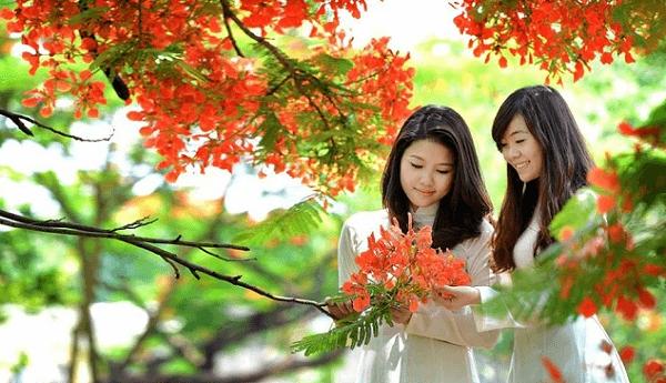 nho-mua-hoa-phuong-60-050328